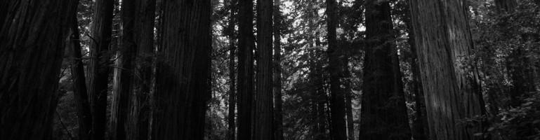 bando_arbres